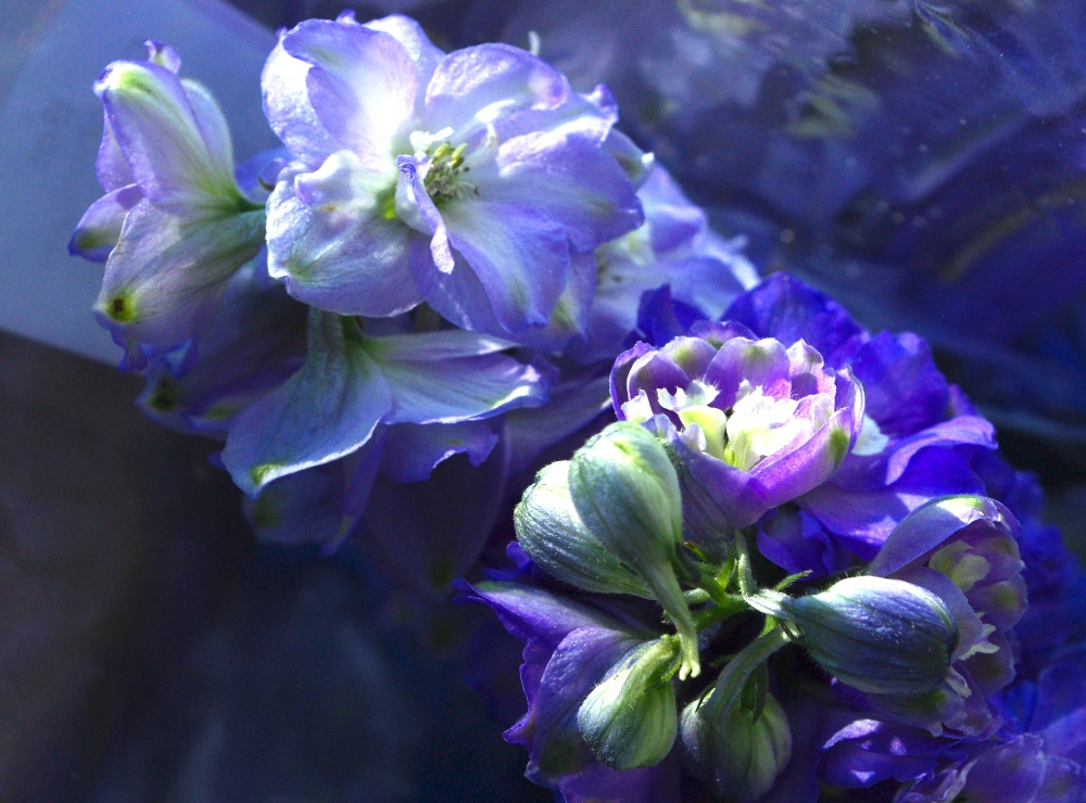 Blue flowers in sunlight
