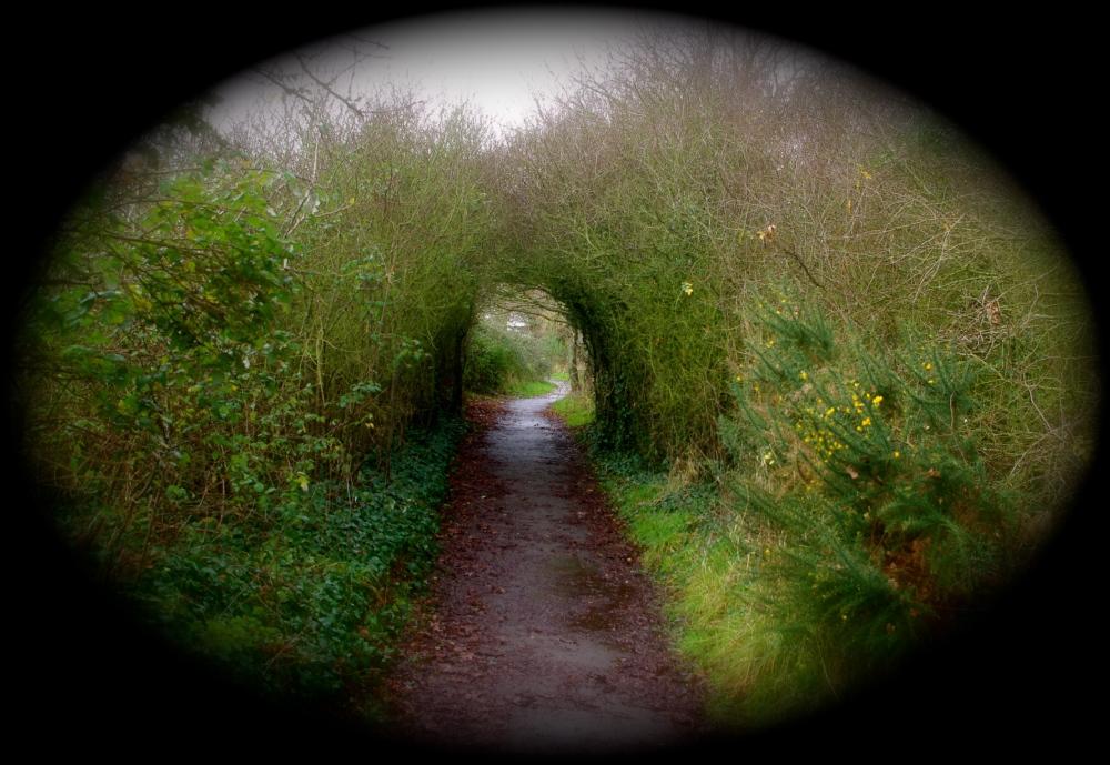 Green-eyed path