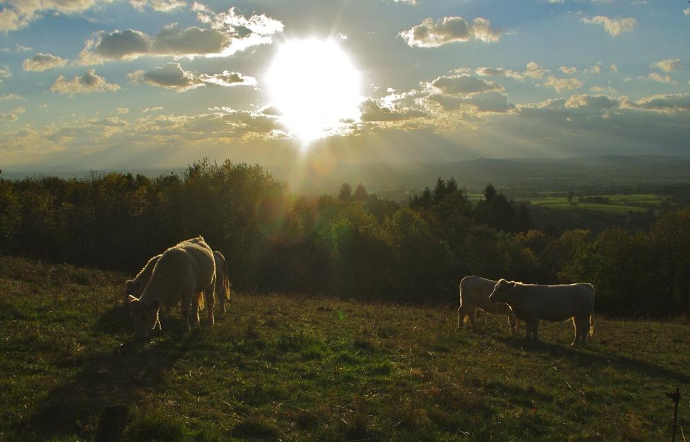 Auvergne hillside