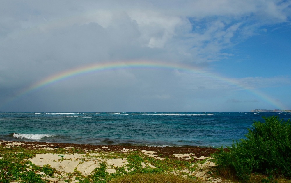Caribbean promise