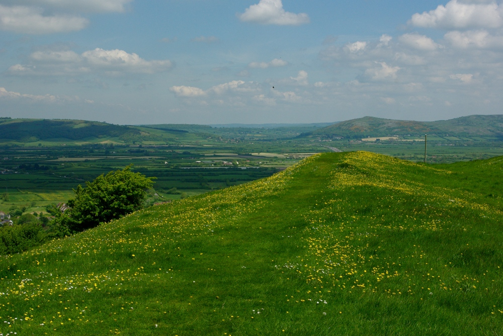 Brent Knoll