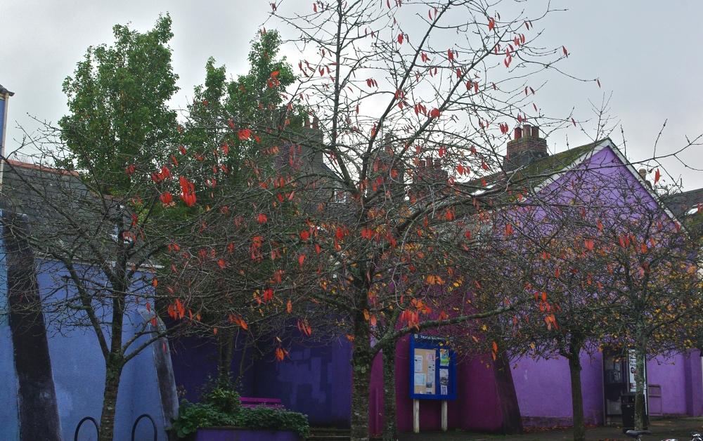 Totnes tree