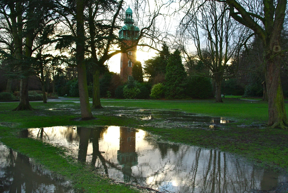 Puddle in the park