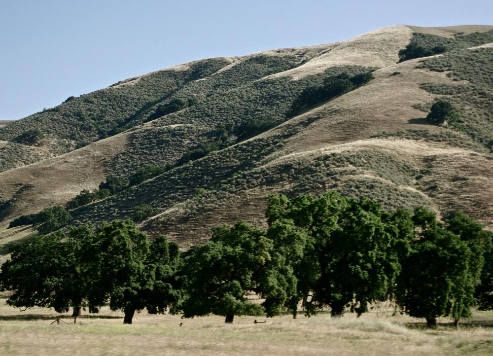 Scene in California