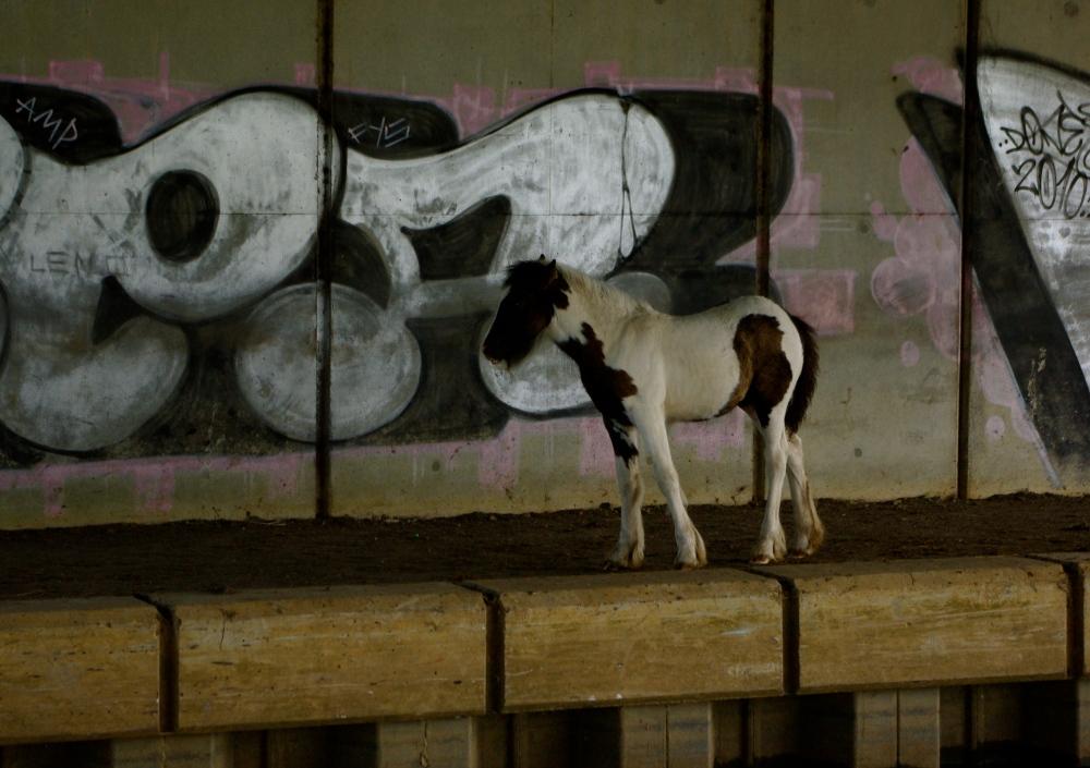 Foal under bridge