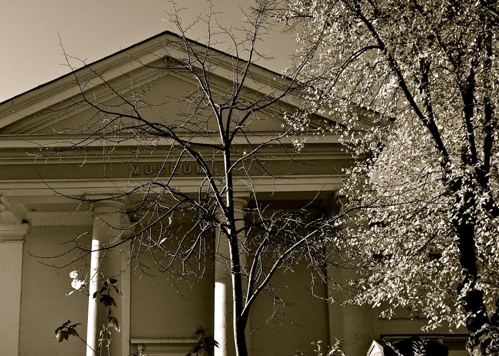 Museum/trees