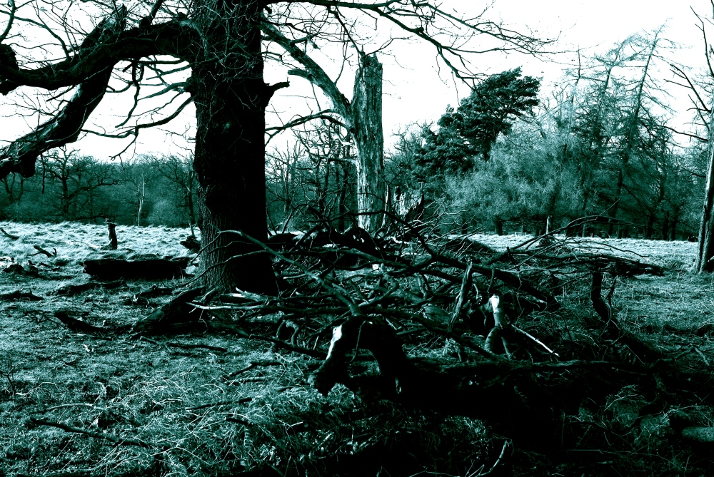 ruined tree