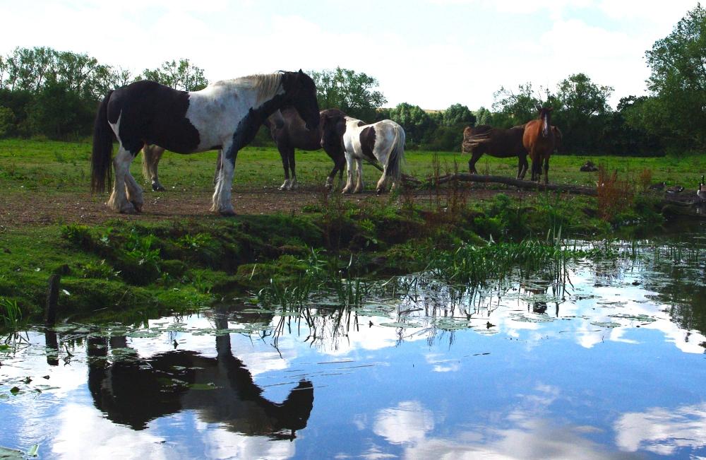 River horses