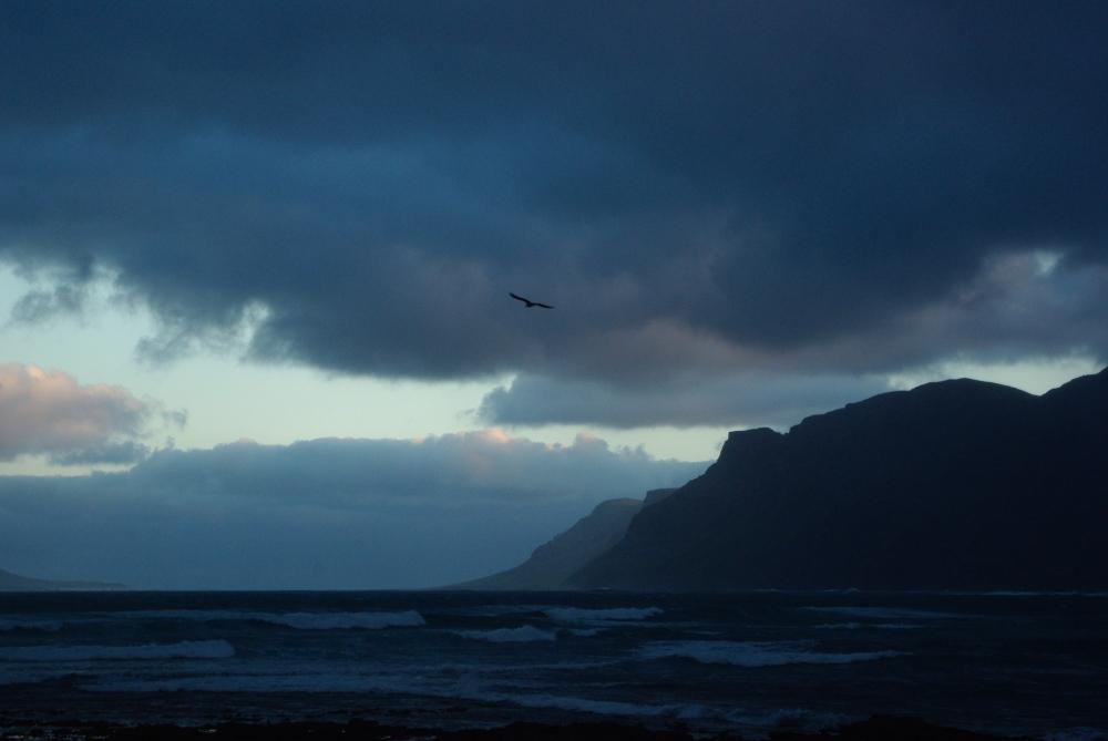 Famara seabird