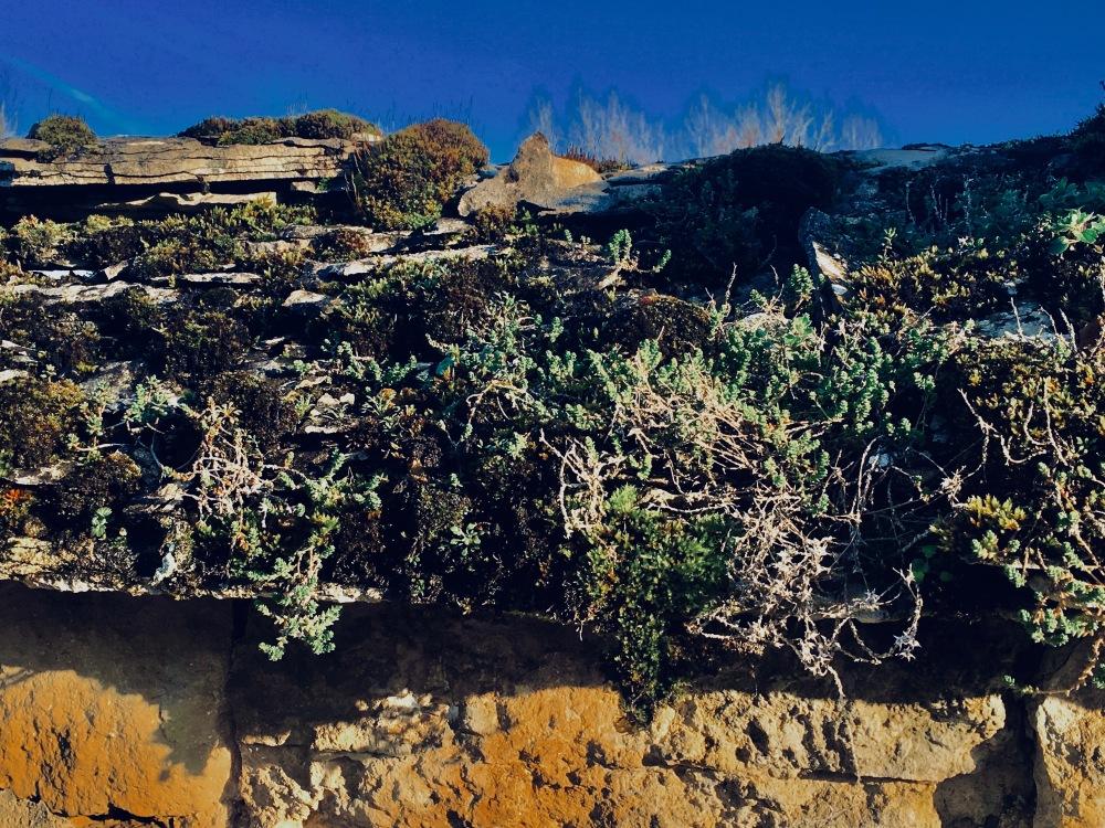 Organic wall